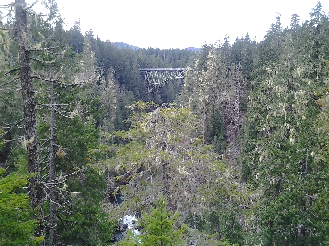 High steel bridge in the distance crossing the Skokomish River